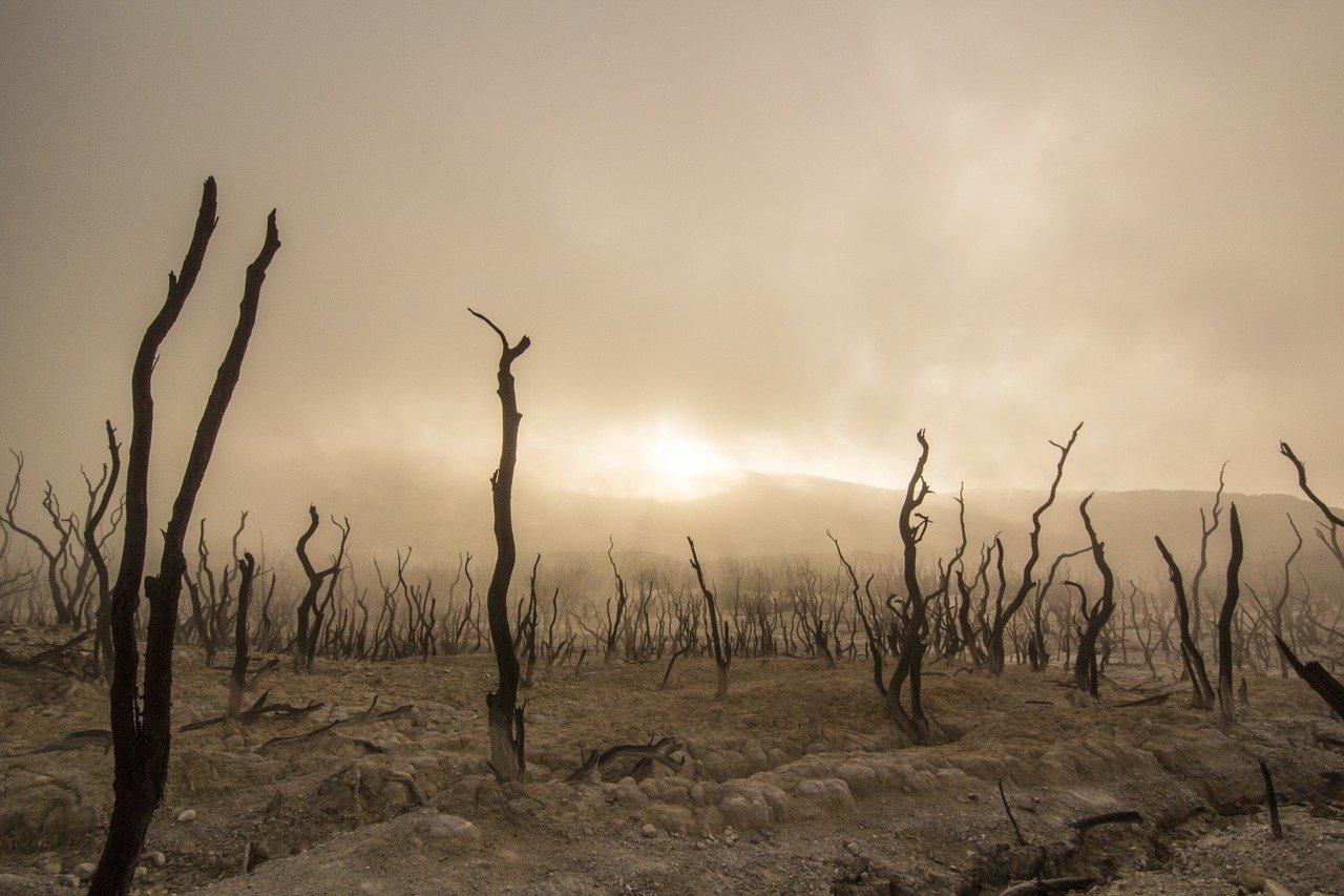 dead-trees-947331_1280